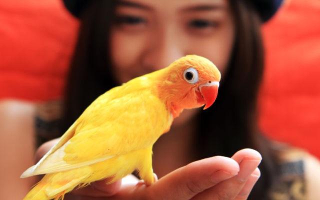 4 cuidados para ter uma ave em casa!