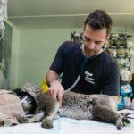8 principais características de um veterinário de sucesso
